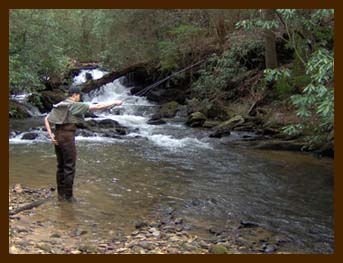 Guided Trout Treks in the Western North Carolina Mountains